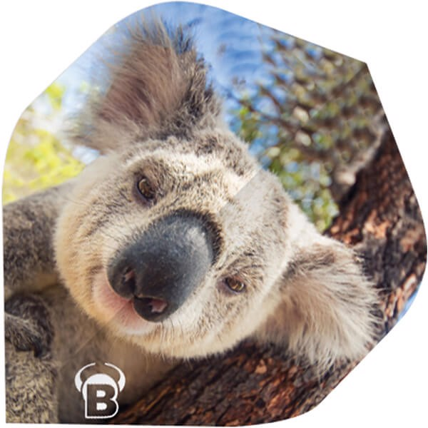 Image of   Motex Flights - Koala